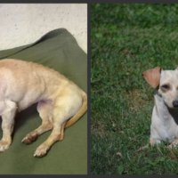 """It is OFFICIAL MY """"MIRACLE"""" LITTLE GIRL IS MINE :) Dog Rescued!Loved!Mine!"""