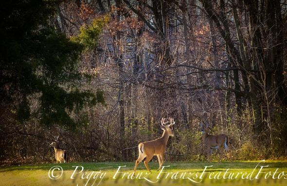 Deer gatheing  Name-