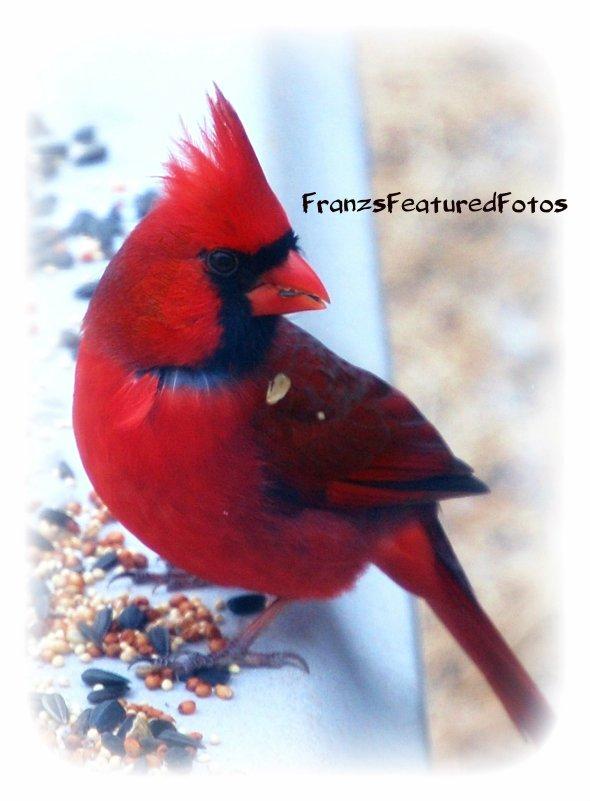 DSC_0329  Cardinal Snow name