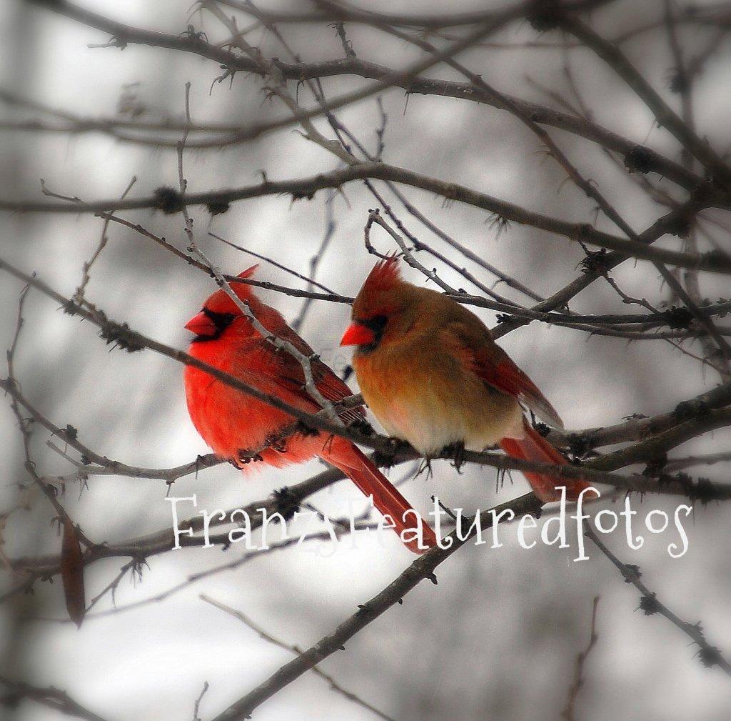 Cardinal Mates_edited-3 name