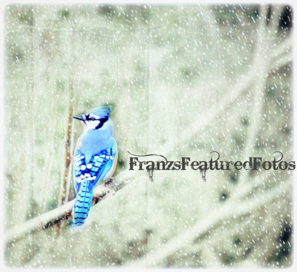 bluejay textured  name