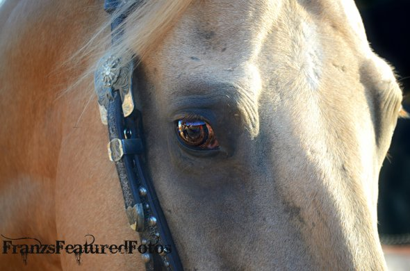 DSC_0116 horses name