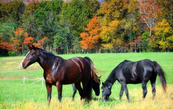 DSC_0468 Horses