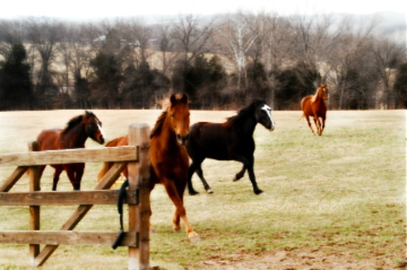 DSC_2527   name horses fence 2