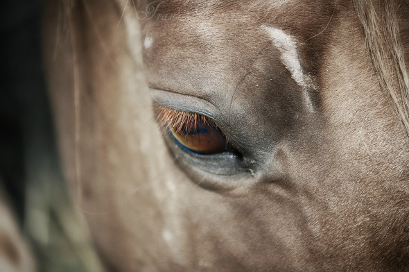DSC_4443 horse eye name