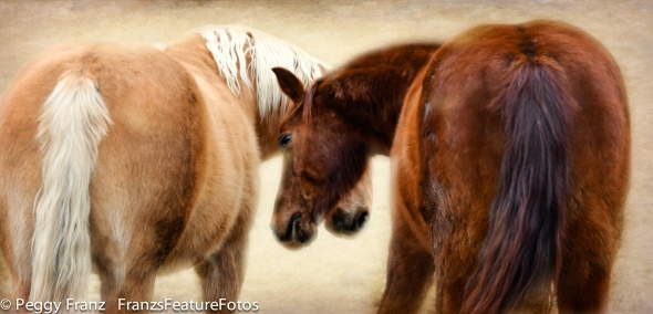 love horses  name-