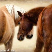 My Love for Horses Favorite Photo's