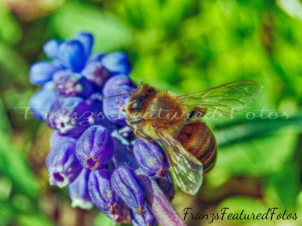 bee name 2 wordpress