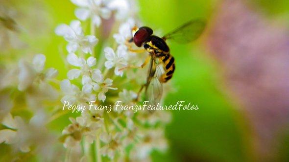 bee 2 name