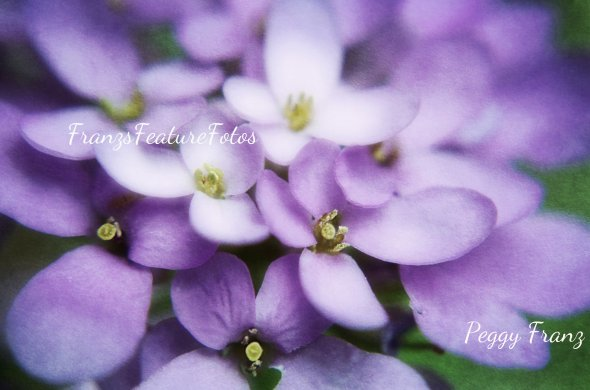 DSC_2008 flowers name