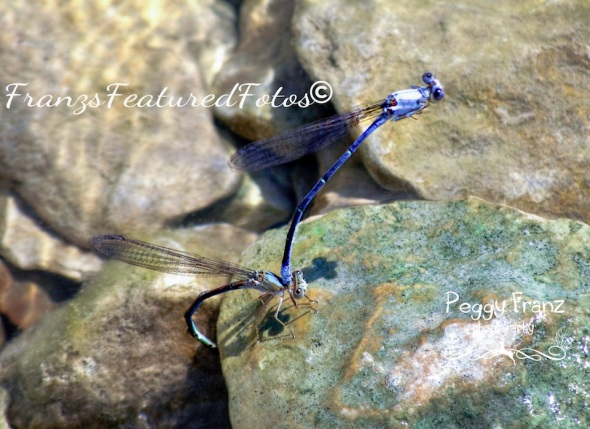 dragon flies  NAME-