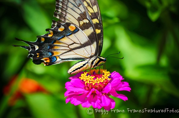 butterfly name 2 LR-1