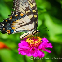 The Beauty of Butterflies