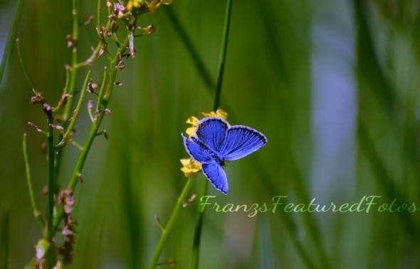 DSC_1691 blue moth name