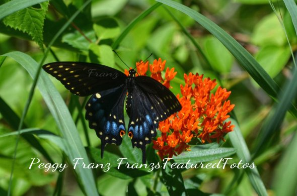DSC_2312 Butterfly Name