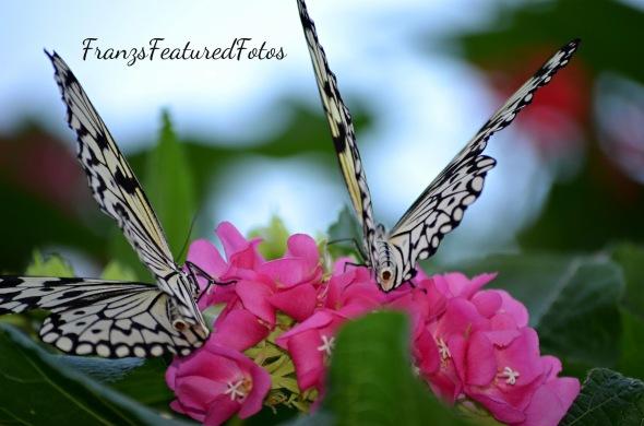 twin butterfly twins 2 LR-