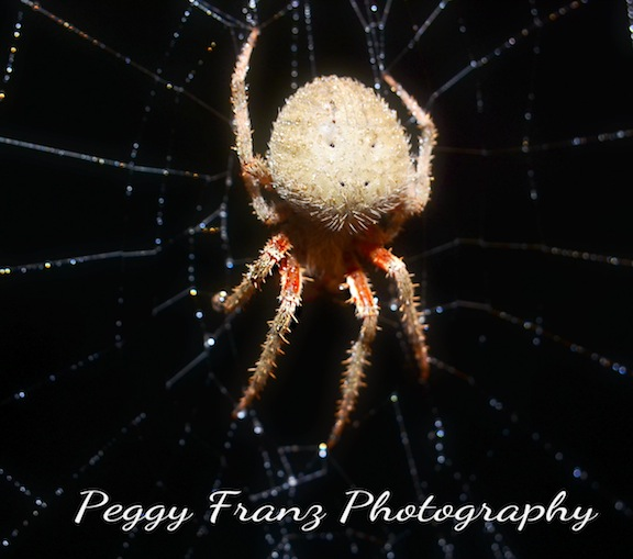 DSC_0088 close up spider name