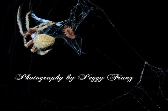 DSC_0725 spider eatting NAME
