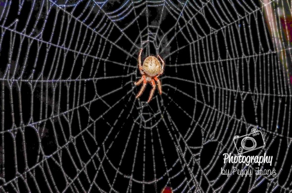 Spider 2    NAME-0086