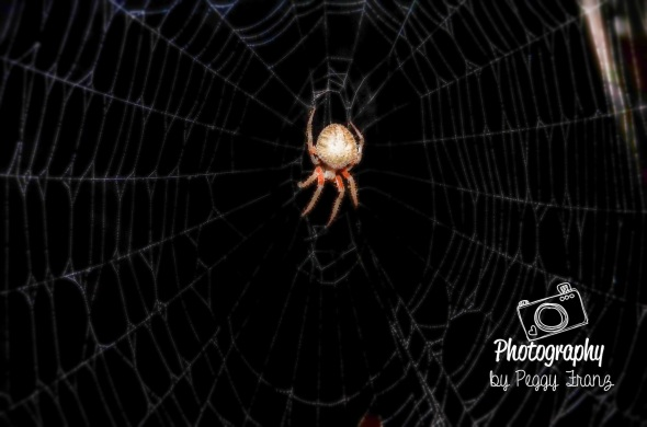 Spider3     NAME-0086