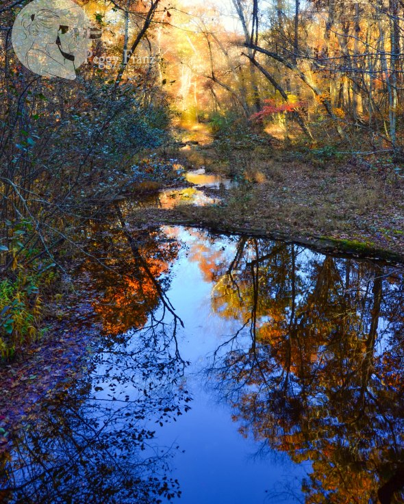 Beautiful Reflection of Pickle Creek
