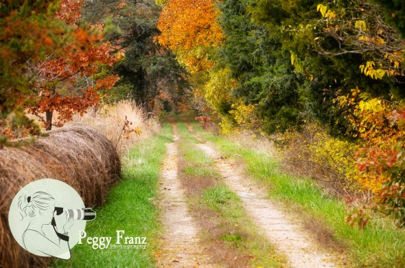 The Old Dirt  Farm Road
