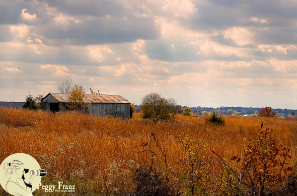 A capture of this abandoned farm with the wheat field