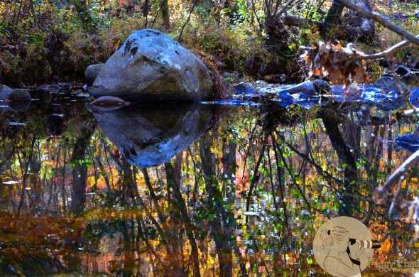 Pickle Creek Hawn State Park