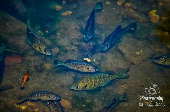 Underwater fish photos NAME-2
