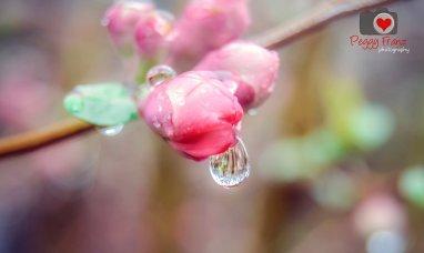 Macro Rain Drop