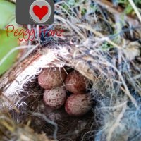 """Come check out """"Baby Birds"""" Adventure from Hatching to Flying the Coup"""