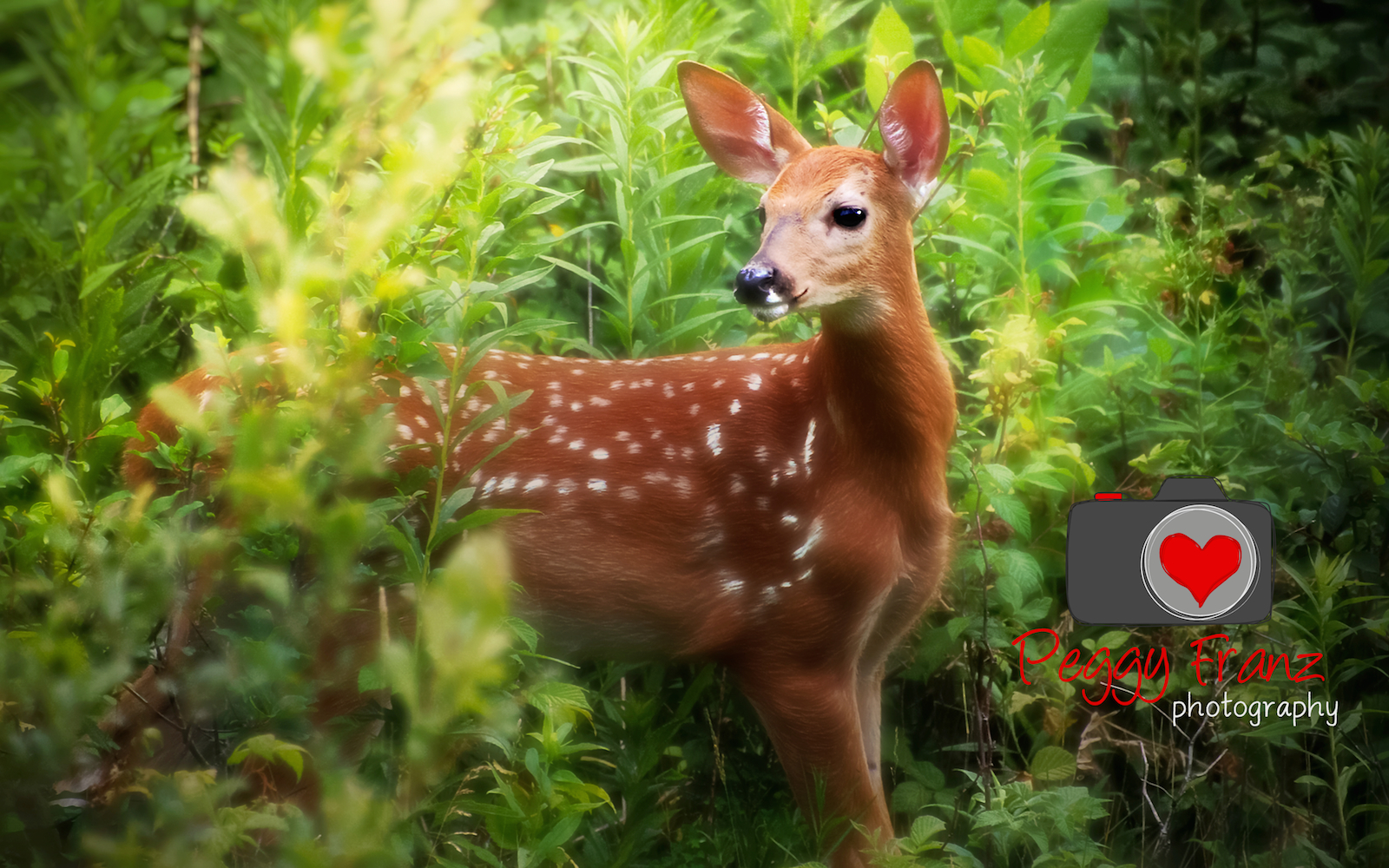 Bay Fawn Peggy -name