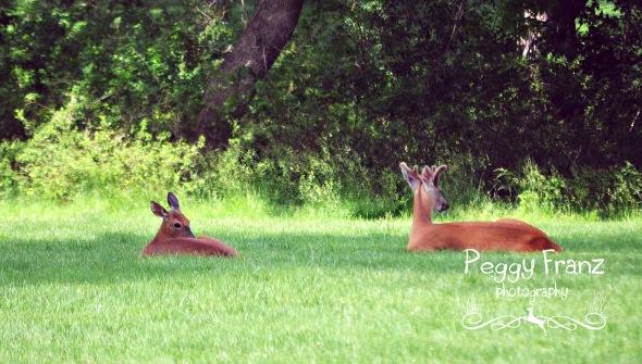 Deer x2 name-2