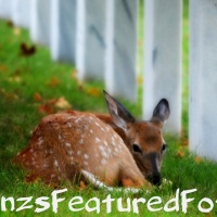 Deer Season Approaching  Take a Look at My Captures