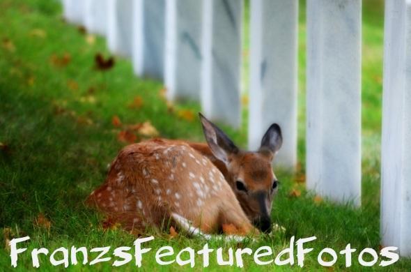 protecting our heros deer name