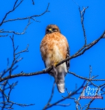 DSC_0139- NAME ORGINAL HAWK