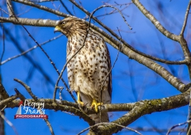DSC_0184 NAME ORGINAL HAWK_